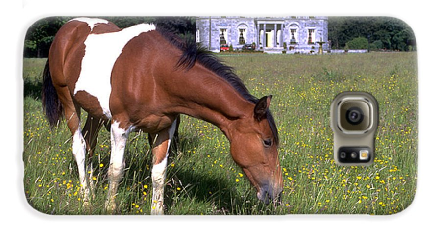 Horse Galaxy S6 Case featuring the photograph Horse Grazes Near St. Clerans by Carl Purcell