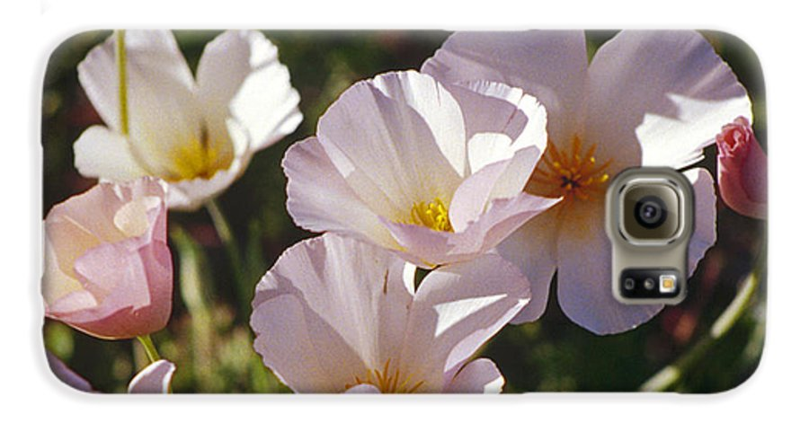 Flowers Galaxy S6 Case featuring the photograph Icelandic Poppies by Kathy McClure