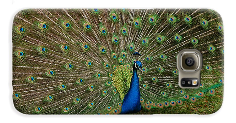 Peacock Galaxy S6 Case featuring the photograph Its All About Him by Suzanne Gaff