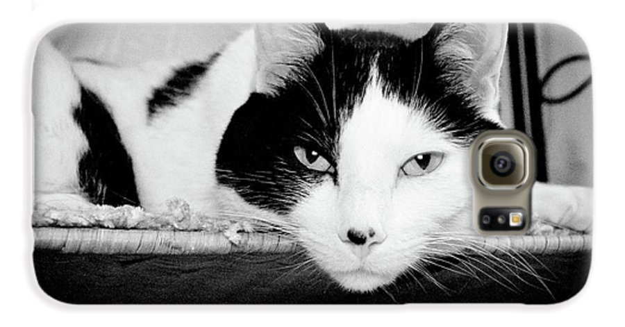 Andee Design Cat Galaxy S6 Case featuring the photograph Le Cat by Andee Design