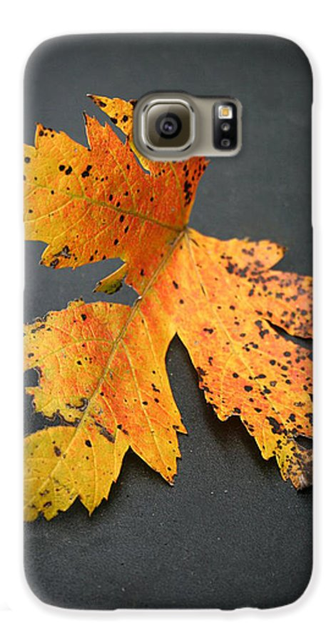 Nature Galaxy S6 Case featuring the photograph Leaf Portrait by Linda Sannuti