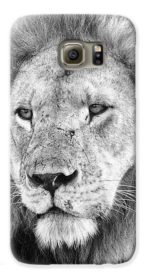 3scape Galaxy S6 Case featuring the photograph Lion King by Adam Romanowicz