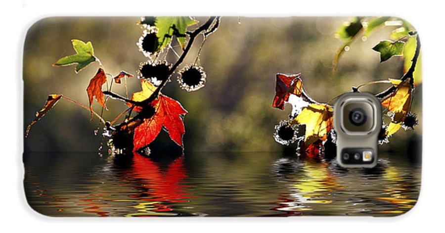 Liquidambar Maple Autumn Fall Flood Water Reflection Galaxy S6 Case featuring the photograph Liquidambar In Flood by Sheila Smart Fine Art Photography