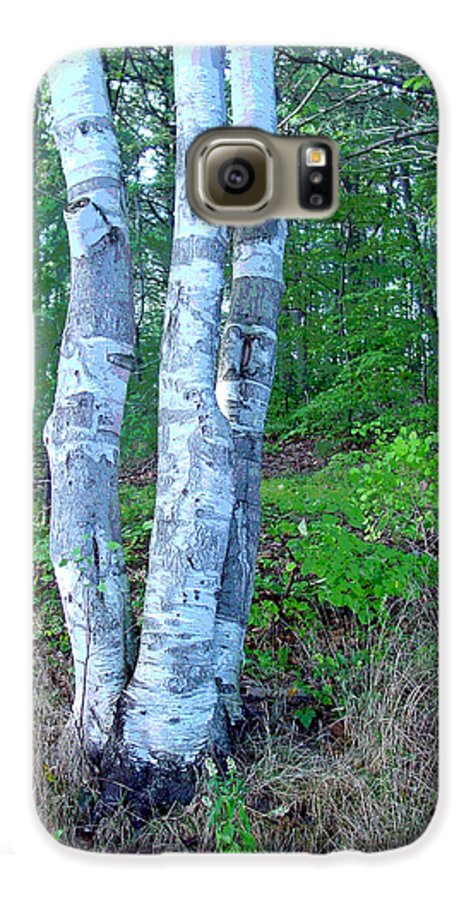 Birch Tree Galaxy S6 Case featuring the photograph Lone Birch In The Maine Woods by Suzanne Gaff
