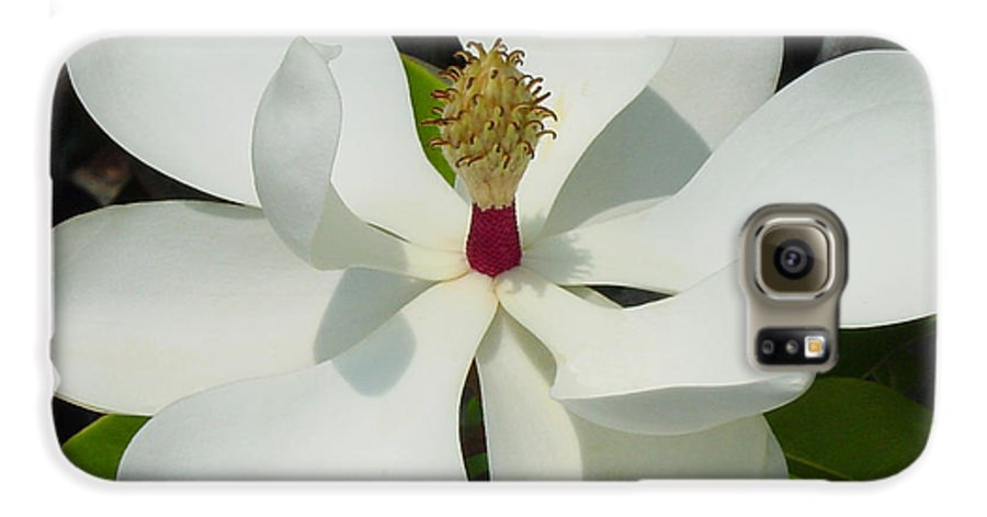 Magnolia Grandiflora Galaxy S6 Case featuring the photograph Magnolia II by Suzanne Gaff