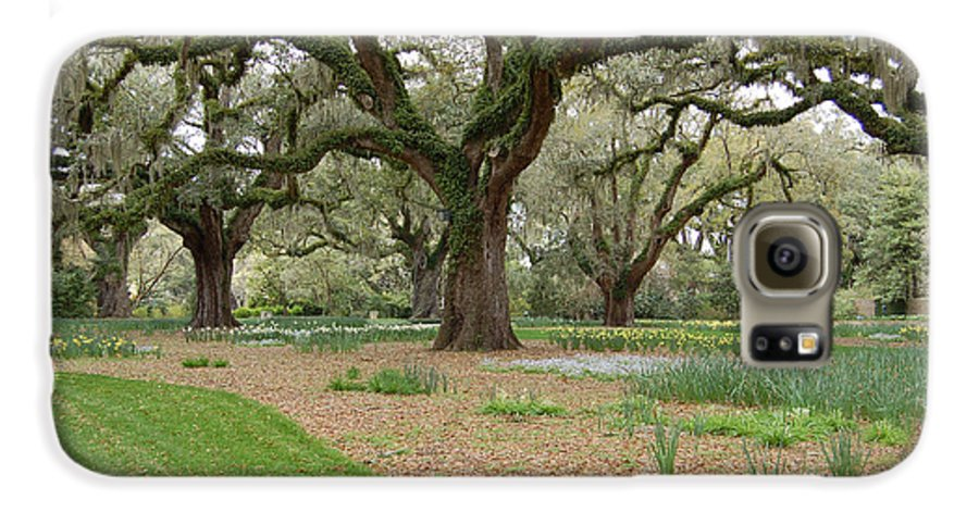 Live Oak Galaxy S6 Case featuring the photograph Majestic Live Oaks In Spring by Suzanne Gaff