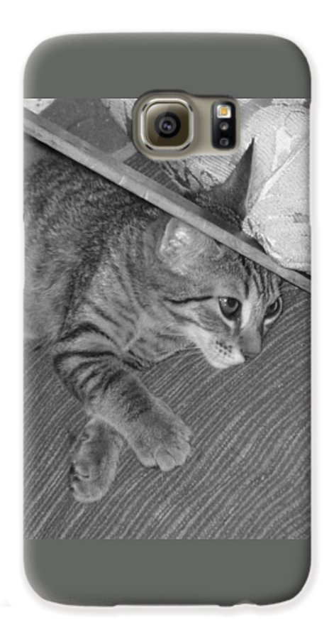 Kitten Galaxy S6 Case featuring the photograph Model Kitten by Pharris Art