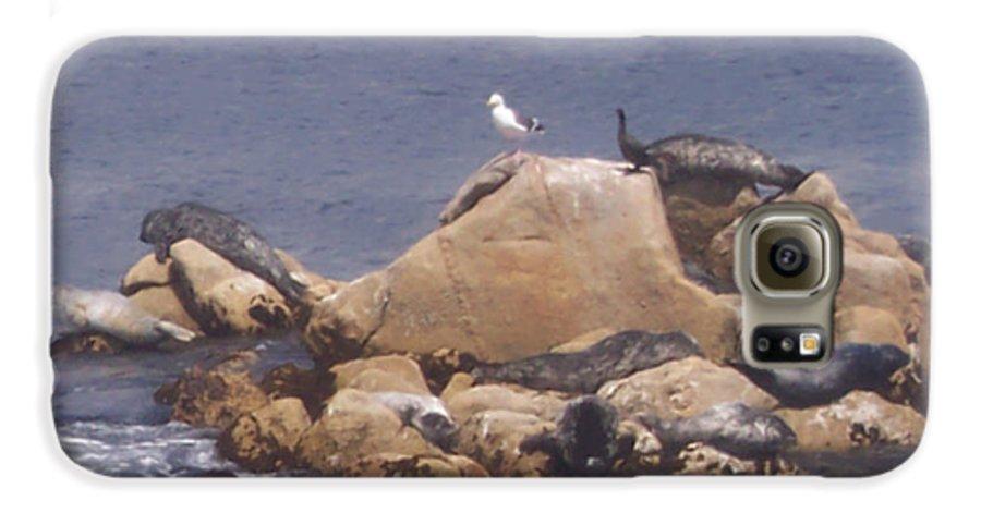 Seal Galaxy S6 Case featuring the photograph Monterey Sun Bath by Pharris Art