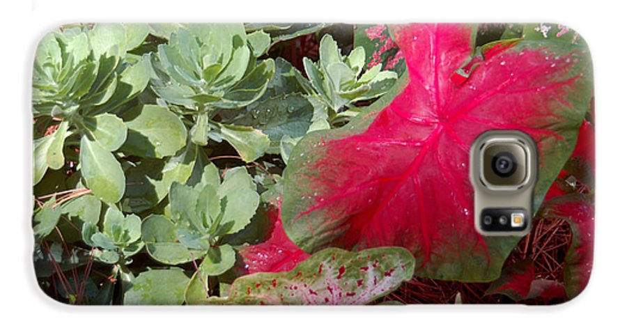 Caladium Galaxy S6 Case featuring the photograph Morning Rain by Suzanne Gaff