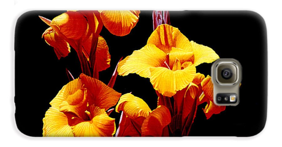 Yellow Cannas Galaxy S6 Case featuring the painting Orange Cannas by Gary Hernandez