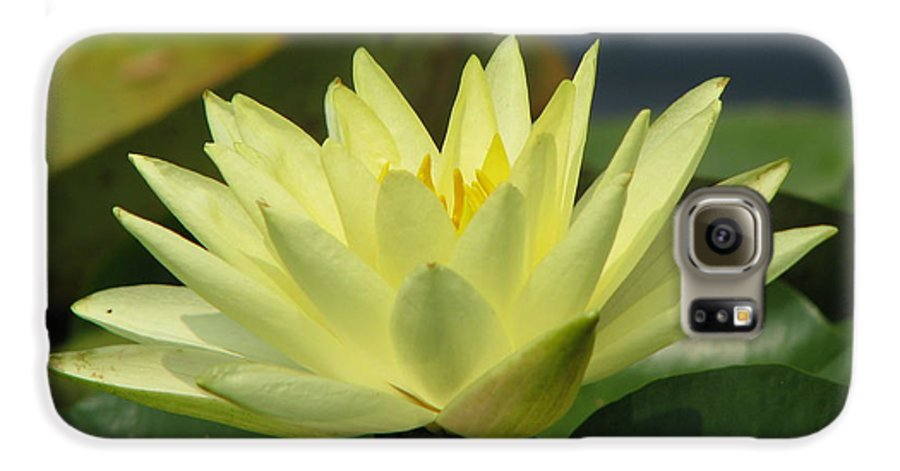 Lillies Galaxy S6 Case featuring the photograph Peace by Amanda Barcon