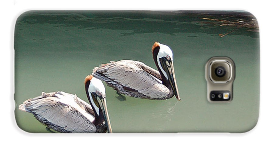 Brown Pelican Galaxy S6 Case featuring the photograph Pelicans Partners by Suzanne Gaff
