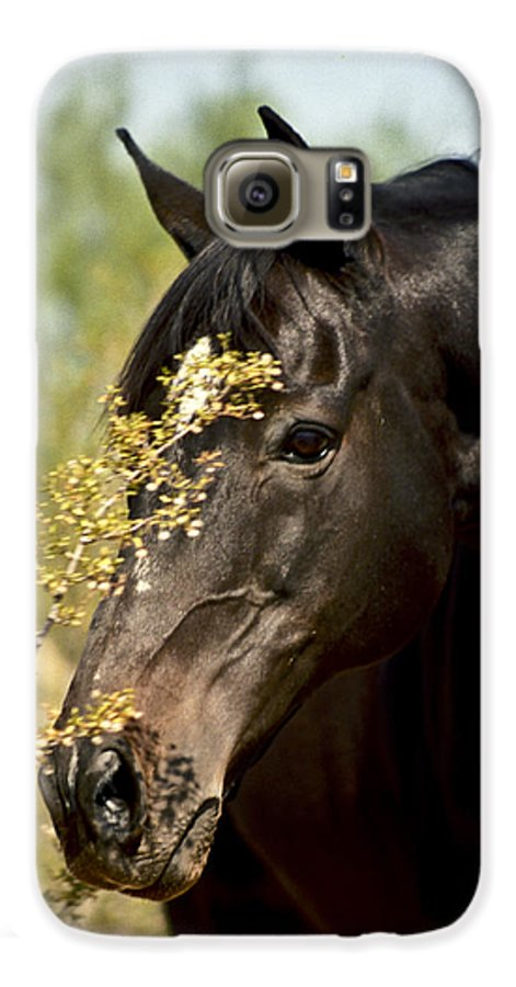 Horse Galaxy S6 Case featuring the photograph Portrait Of A Thoroughbred by Kathy McClure