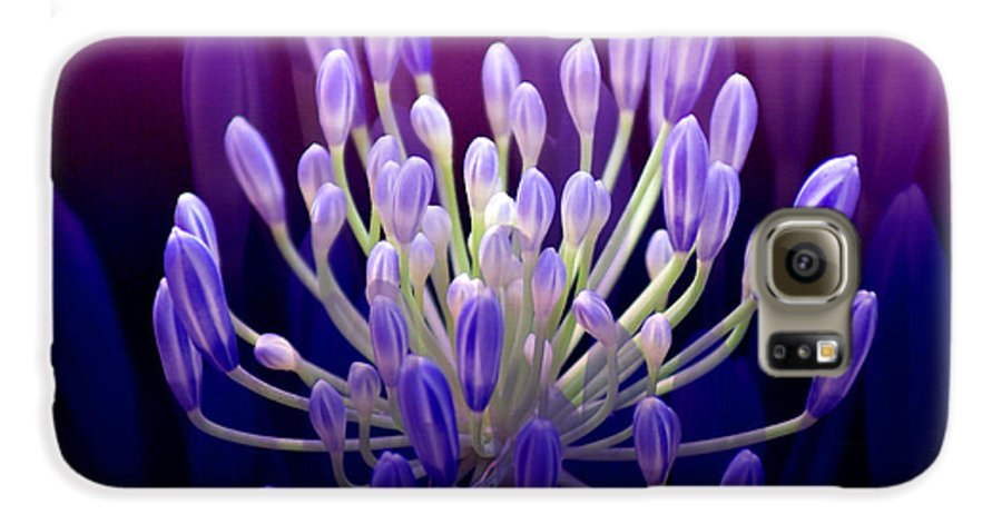 Agapanthus Galaxy S6 Case featuring the photograph Praise by Holly Kempe