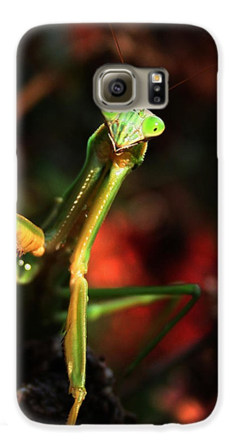 Praying Mantis Galaxy S6 Case featuring the photograph Praying Mantis Portrait by Linda Sannuti