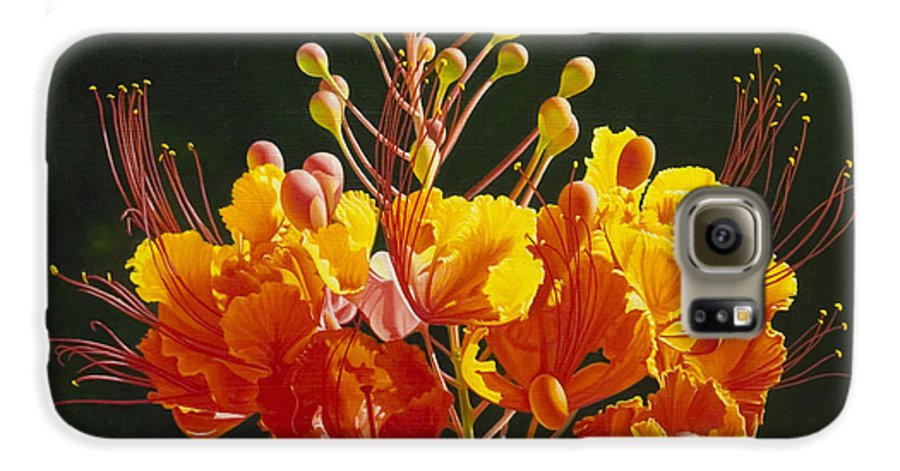 Floral Galaxy S6 Case featuring the painting Pride Of Barbados by Gary Hernandez
