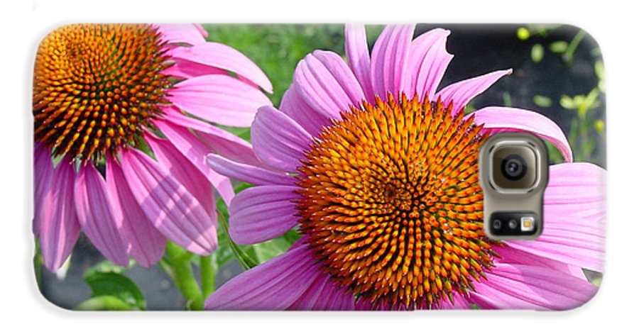 Flower Galaxy S6 Case featuring the photograph Purple Coneflowers by Suzanne Gaff