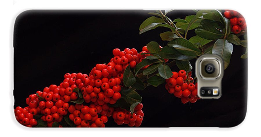 Winter Galaxy S6 Case featuring the photograph Pyracantha Berries On Black - Pennsylvania by Anna Lisa Yoder