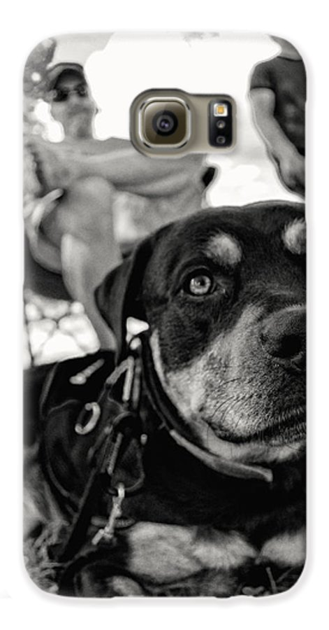 Rottweiler Galaxy S6 Case featuring the photograph Relaxing Rottie In Black And White by Greg and Chrystal Mimbs