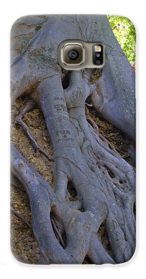 Tree Galaxy S6 Case featuring the photograph Roots by Suzanne Gaff