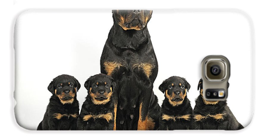 Dog Galaxy S6 Case featuring the photograph Rottweiler Dog And Puppies by John Daniels