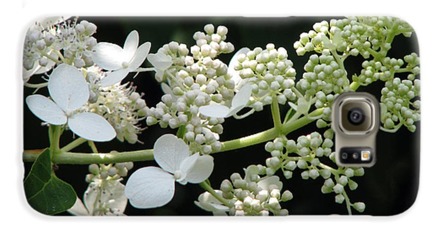 Hydrangea Galaxy S6 Case featuring the photograph Simply by Amanda Barcon