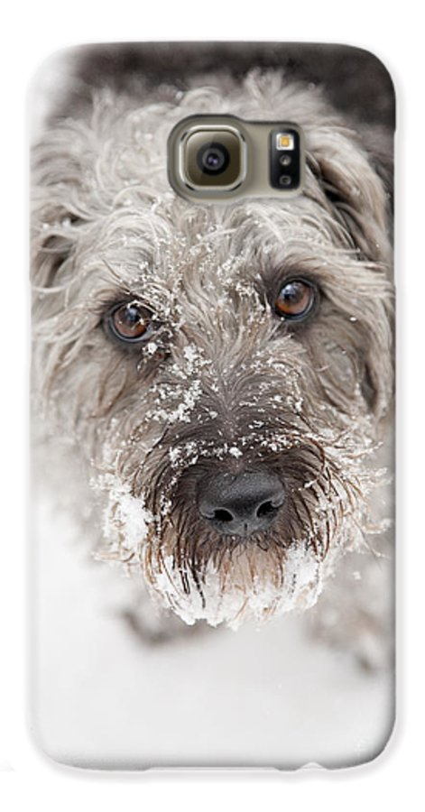 Pup Galaxy S6 Case featuring the photograph Snowy Faced Pup by Natalie Kinnear