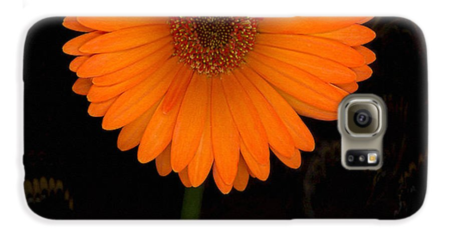 Gerbera Daisy Galaxy S6 Case featuring the photograph Standing Tall by Suzanne Gaff