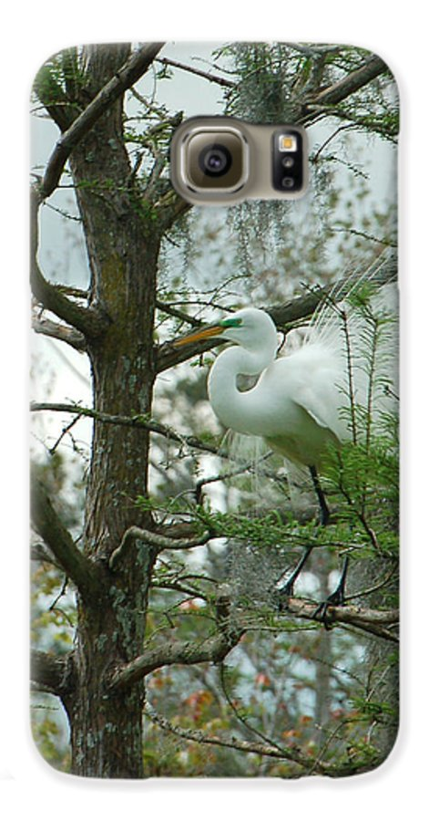 Egret Galaxy S6 Case featuring the photograph The Mating Dance by Suzanne Gaff