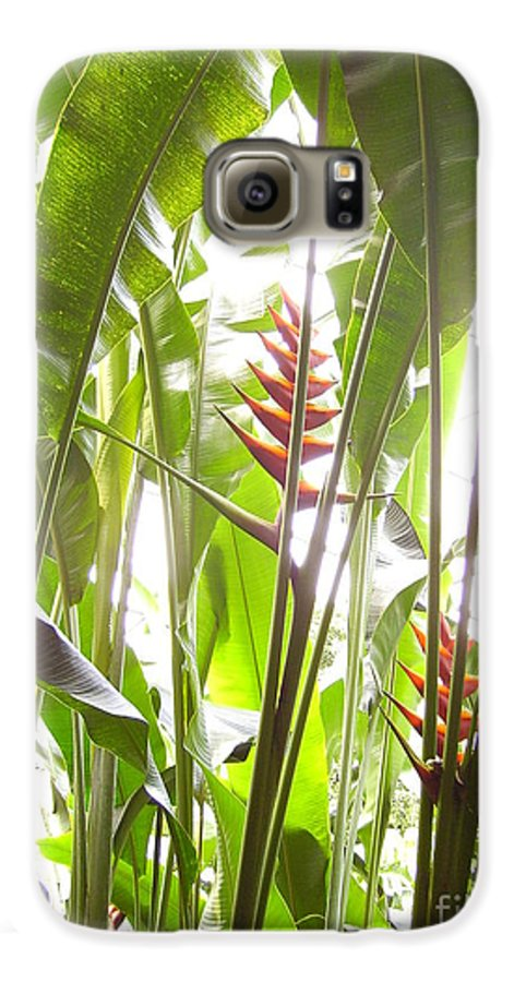 Plants Galaxy S6 Case featuring the photograph Tropical2 by Heather Morris