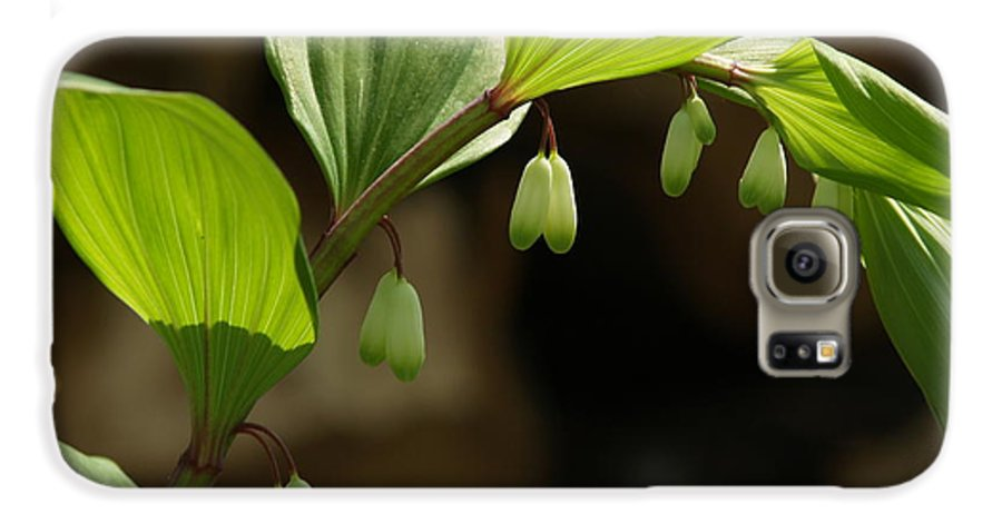 Solomon's Seal Galaxy S6 Case featuring the photograph Variegated Solomon's Seal In Spring - Pennsylvania by Anna Lisa Yoder