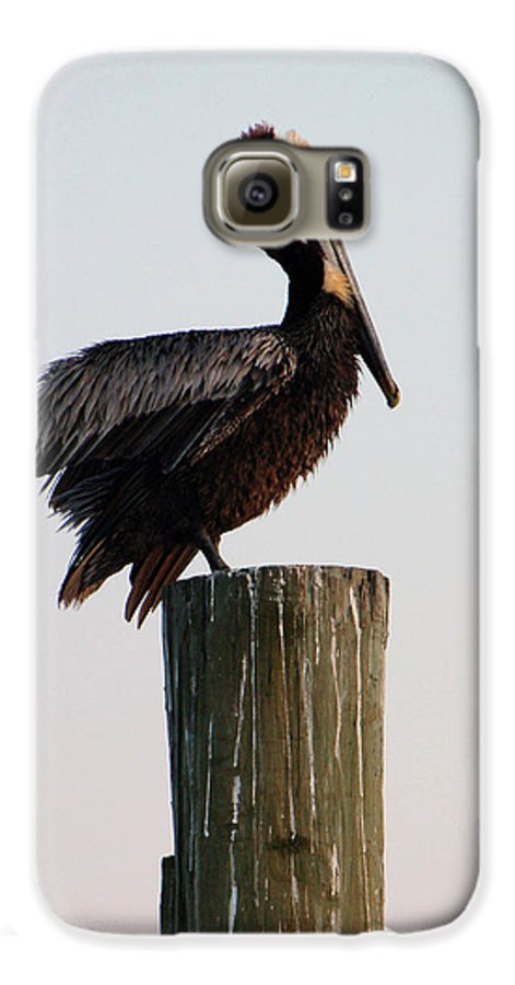 Brown Pelican Galaxy S6 Case featuring the photograph Will This Pose Do by Suzanne Gaff