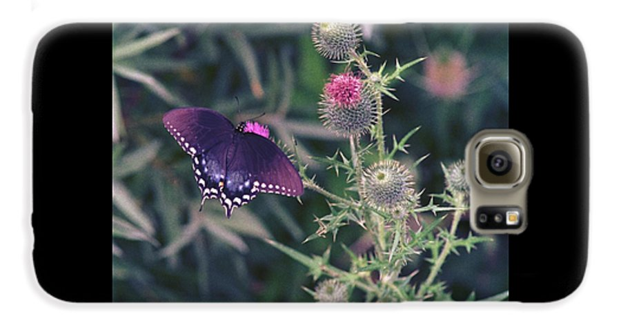 Butterfly Galaxy S6 Case featuring the photograph 060207-13 by Mike Davis