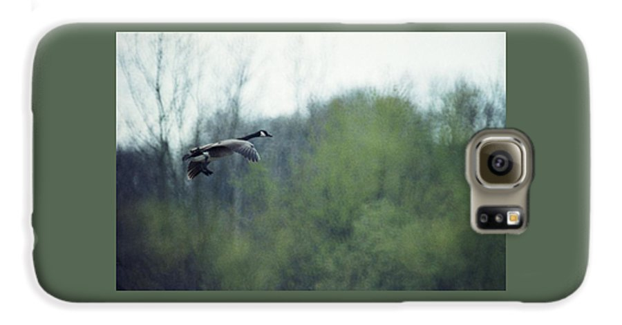 Canada Goose Galaxy S6 Case featuring the photograph 070406-40 by Mike Davis
