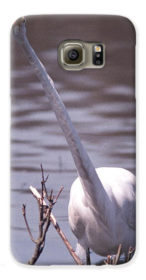 Egret Galaxy S6 Case featuring the photograph 070406-9 by Mike Davis