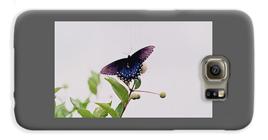 Butterfly Galaxy S6 Case featuring the photograph 080706-5 by Mike Davis