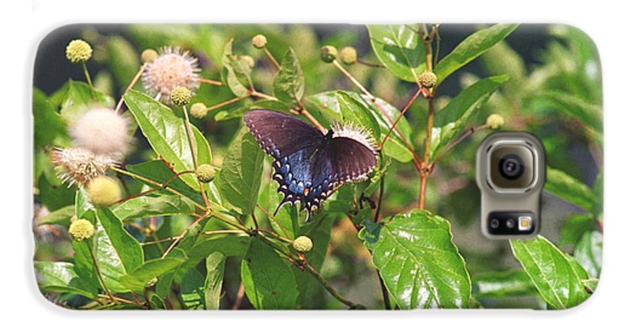 Butterfly Galaxy S6 Case featuring the photograph 080706-6 by Mike Davis