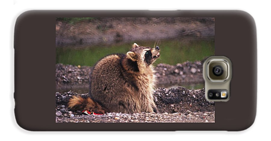 Raccoon Galaxy S6 Case featuring the photograph 070406-67 by Mike Davis