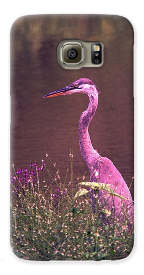 Great Blue Heron Galaxy S6 Case featuring the photograph 080706-12 by Mike Davis