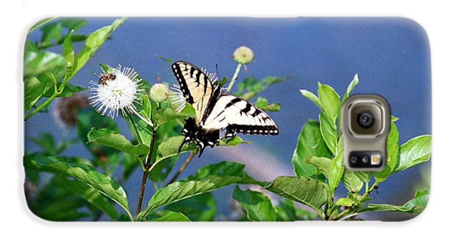 Butterfly Galaxy S6 Case featuring the photograph 080706-7 by Mike Davis