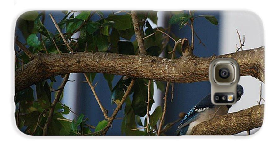 Birds Galaxy S6 Case featuring the photograph Blue Bird by Rob Hans