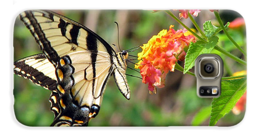 Butterfly Galaxy S6 Case featuring the photograph Butterfly by Amanda Barcon