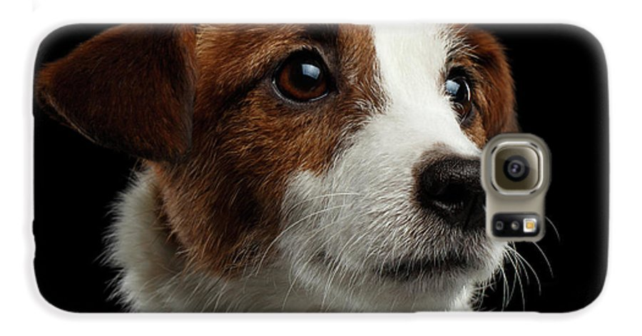 Closeup Galaxy S6 Case featuring the photograph Closeup Portrait Of Jack Russell Terrier Dog On Black by Sergey Taran
