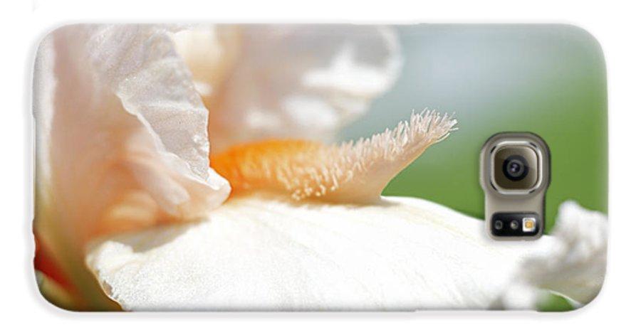 Genus Iris Galaxy S6 Case featuring the photograph Iris Flowers by Tony Cordoza