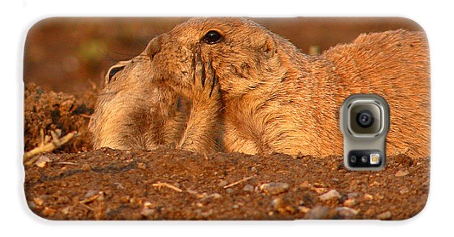Prairie Dog Galaxy S6 Case featuring the photograph Prairie Dog Tender Sunset Kiss by Max Allen