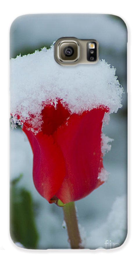 Tulip Galaxy S6 Case featuring the photograph Snowy Red Riding Hood by Louise Magno