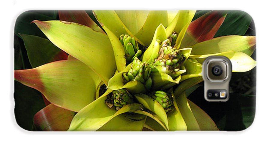 Tropical Galaxy S6 Case featuring the photograph Tropical by Amanda Barcon