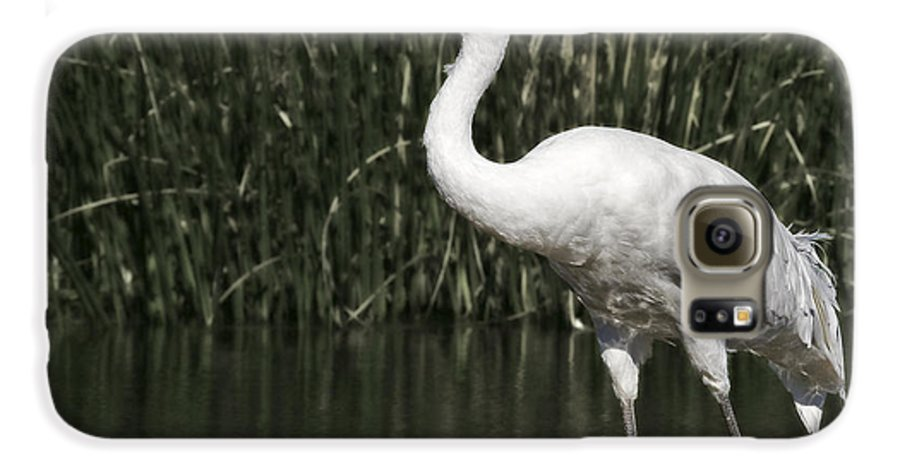 Whooping Galaxy S6 Case featuring the photograph Whooping Crane by Al Mueller