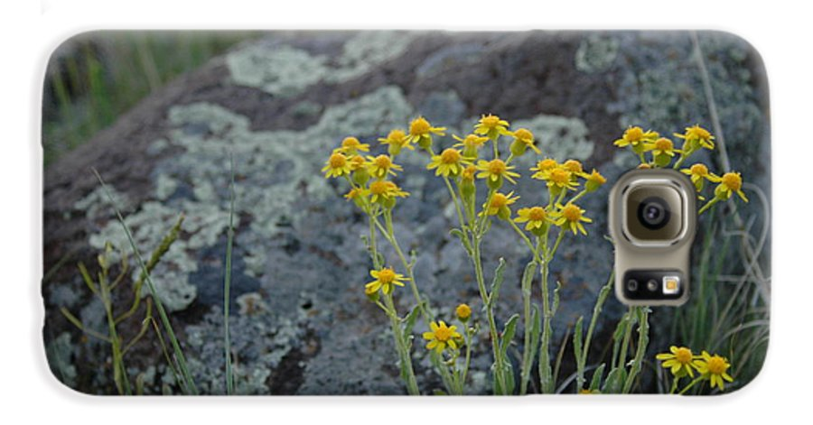 Flowers Galaxy S6 Case featuring the photograph Untitled by Kathy Schumann
