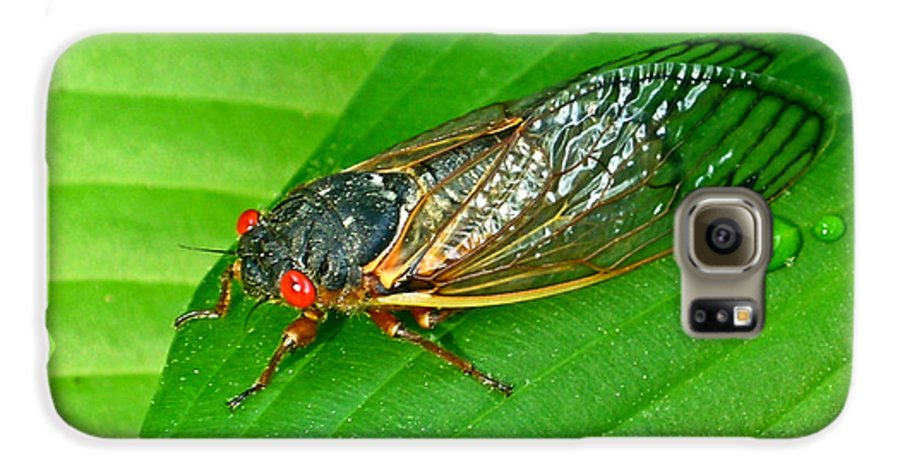 17 Galaxy S6 Case featuring the photograph 17 Year Periodical Cicada by Douglas Barnett